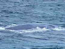 , WORLDS LARGEST ANIMAL IN THE SHALLOWS!