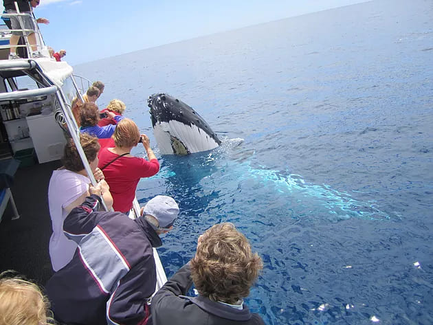 Albany Whale Watching