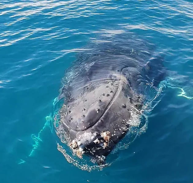 The two BEST spots for Whale watching in the South West of WA!
