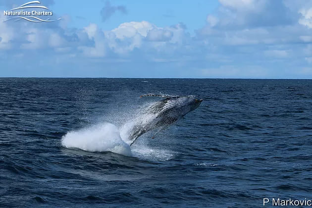 Whale Watching Tours – Augusta and Albany