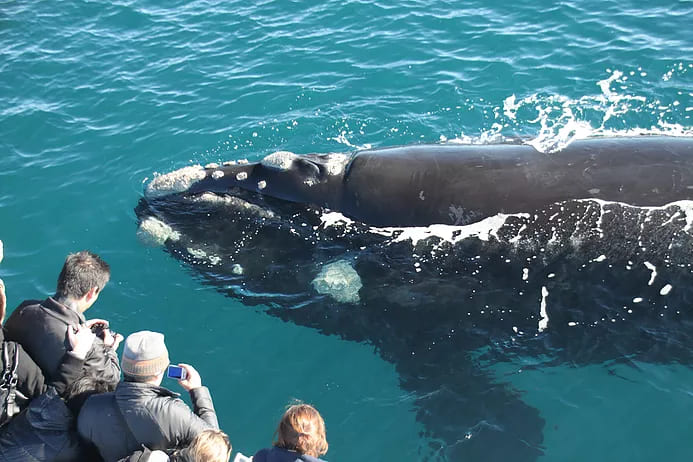 , Augusta Whale Watching