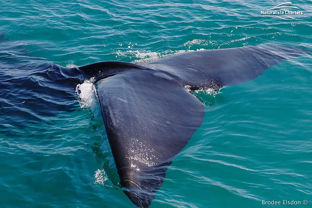 , The two BEST spots for Whale watching in the South West of WA!