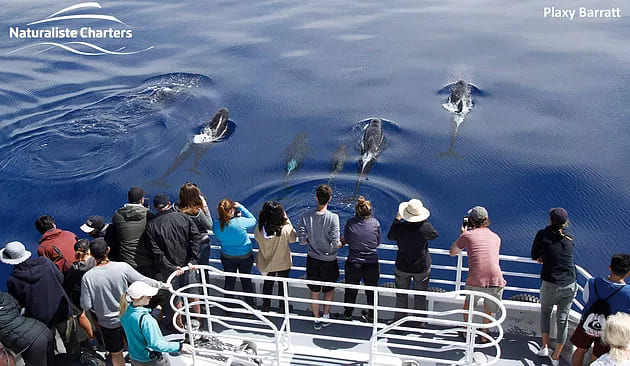 Bremer Canyon Killer Whale (Orca) Expeditions – Things to know