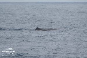 , Slicks and SPERM WHALES!