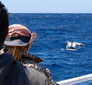Tourists watching the whales