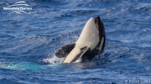 Whale Watching in Western Australia - March 8, 2020 - 10