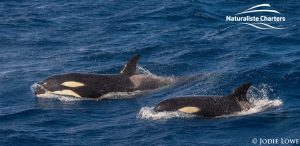 Whale Watching in Western Australia - March 8, 2020 - 23
