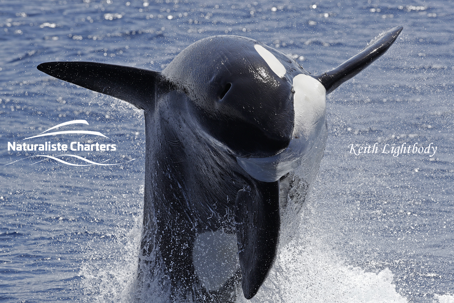 The 2020 Bremer Bay killer whale Wrap-up!