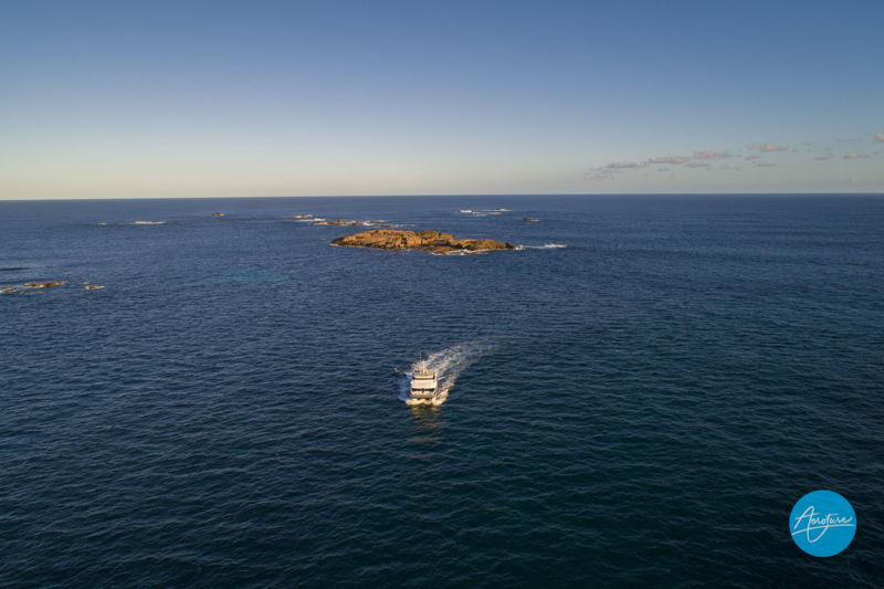 , Perth Whale Watching