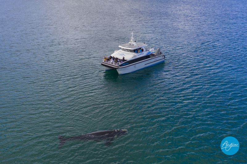 , Albany Whale Watching