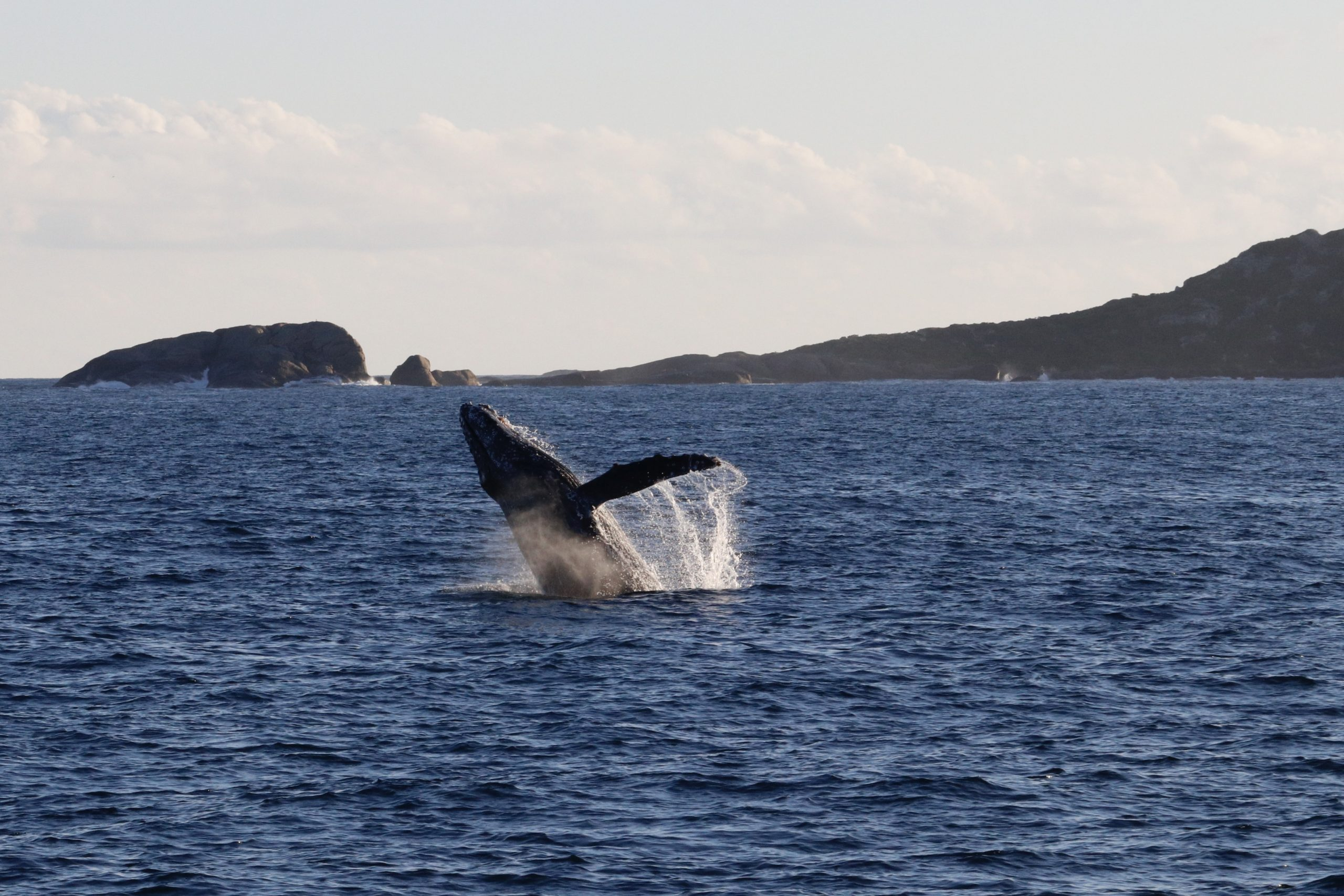Augusta Whale Watching – WE'RE BACK!