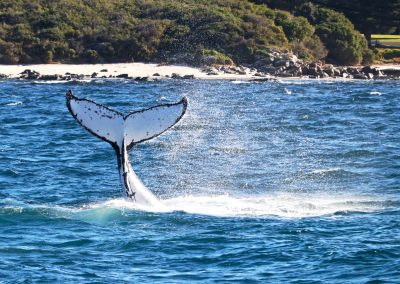 whale watching down south