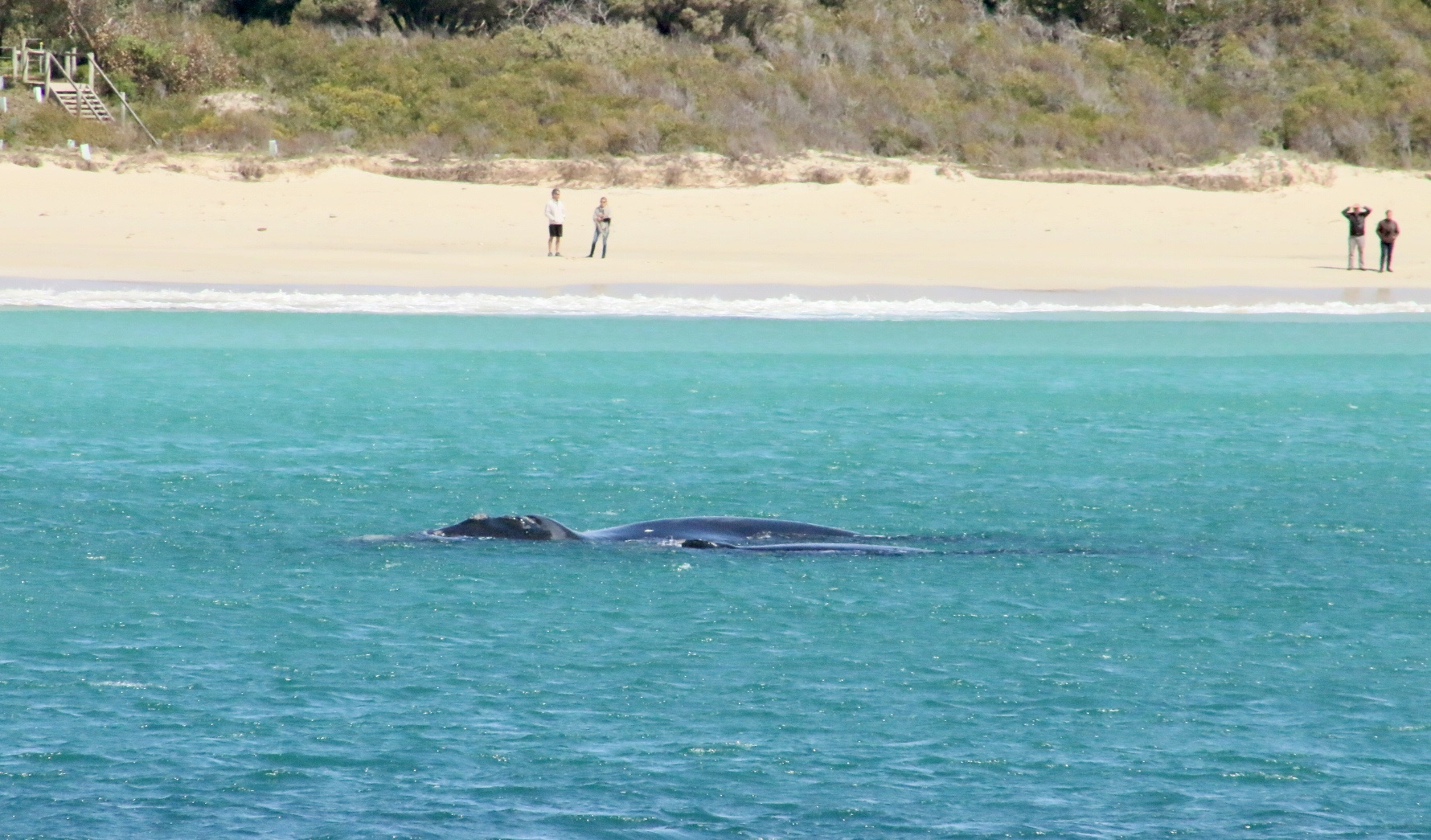 Fun Facts about Southern Right Whales