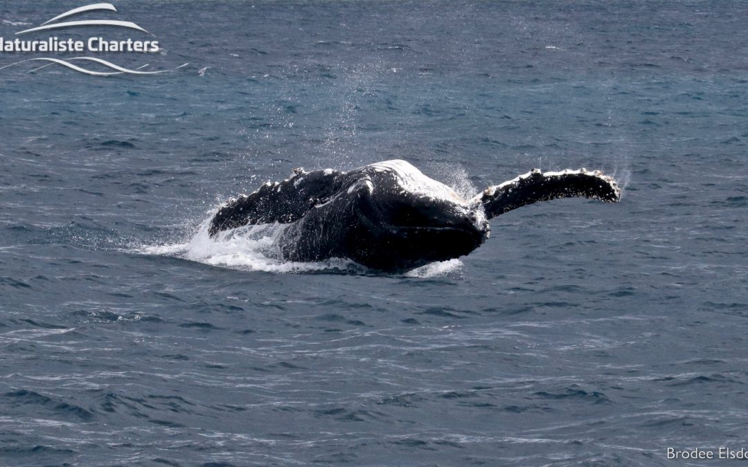 When is whale watching season in Dunsborough?