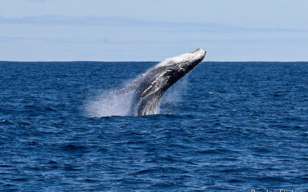 Whale of a week in the west!