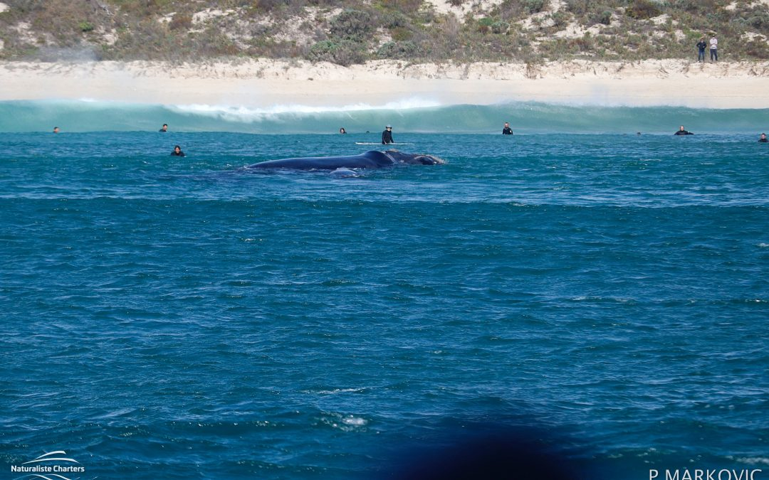 Whale Watching in Dunsborough