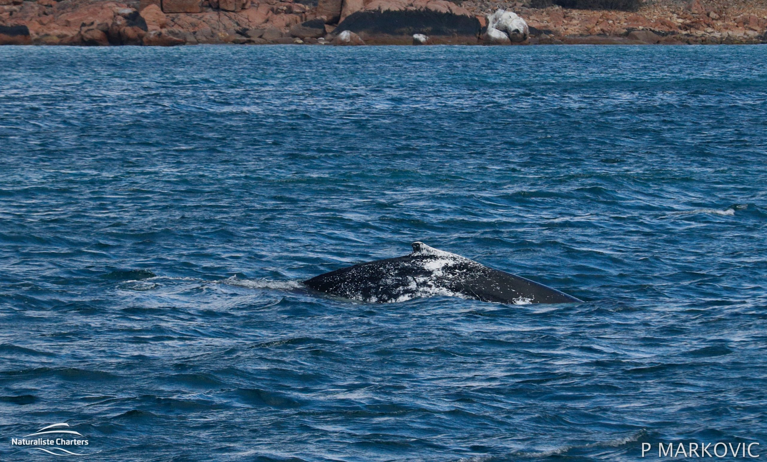 Whale Watching Dunsborough Scaled