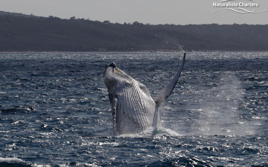 How to prepare for your Western Australian Whale Watching tour!