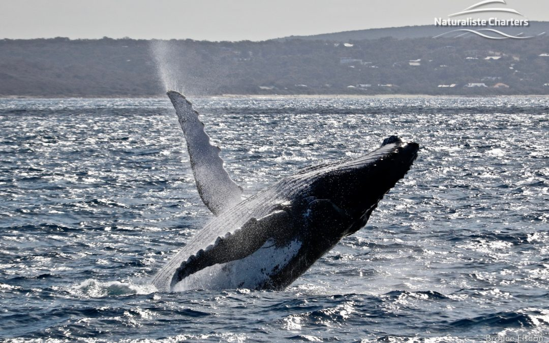 Sunsets and whale watching… no better combo!