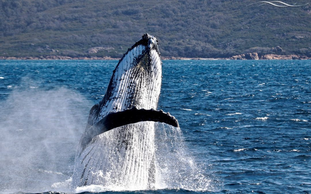 FAQ's about Whale Watching in 2020