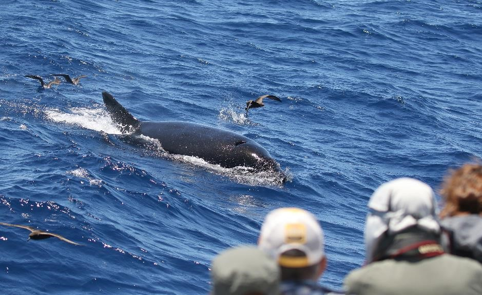 Is Whale Watching Ethical?