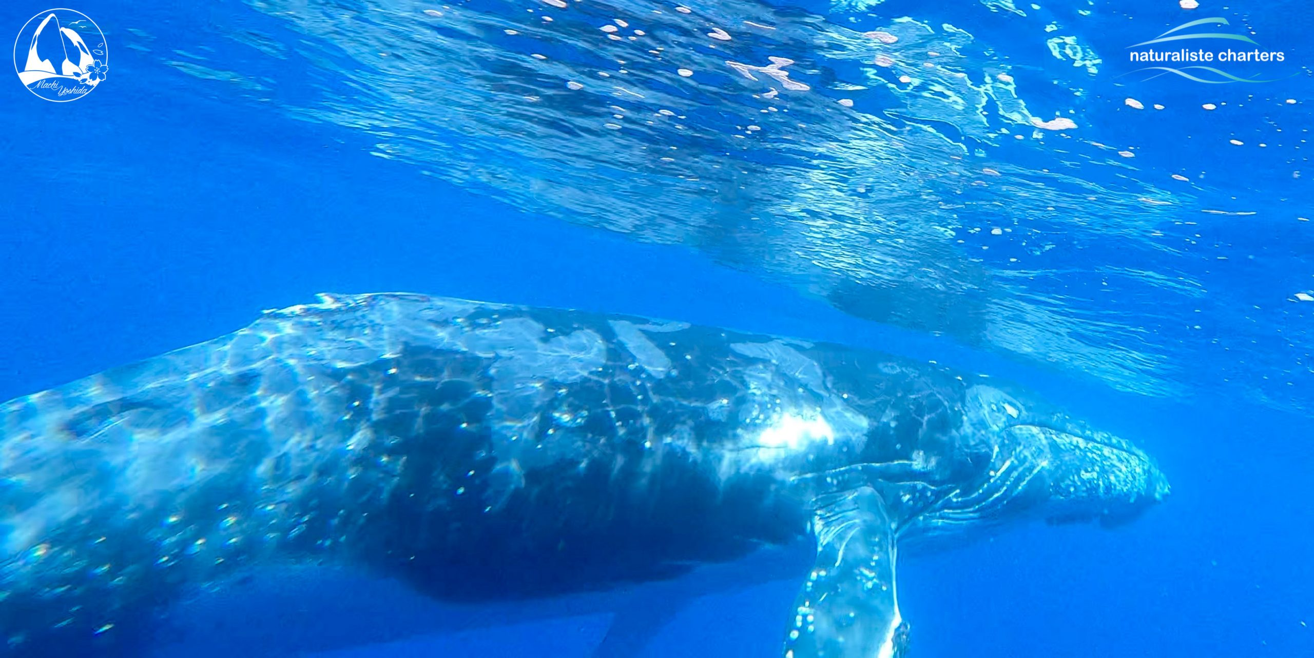 How Deep can Whales Dive?