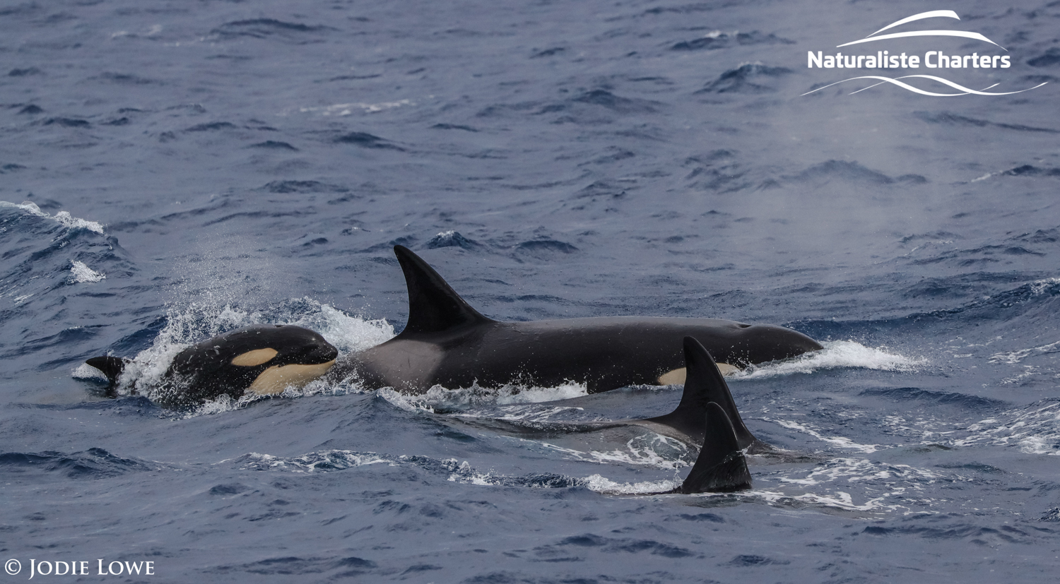killer whales expedition