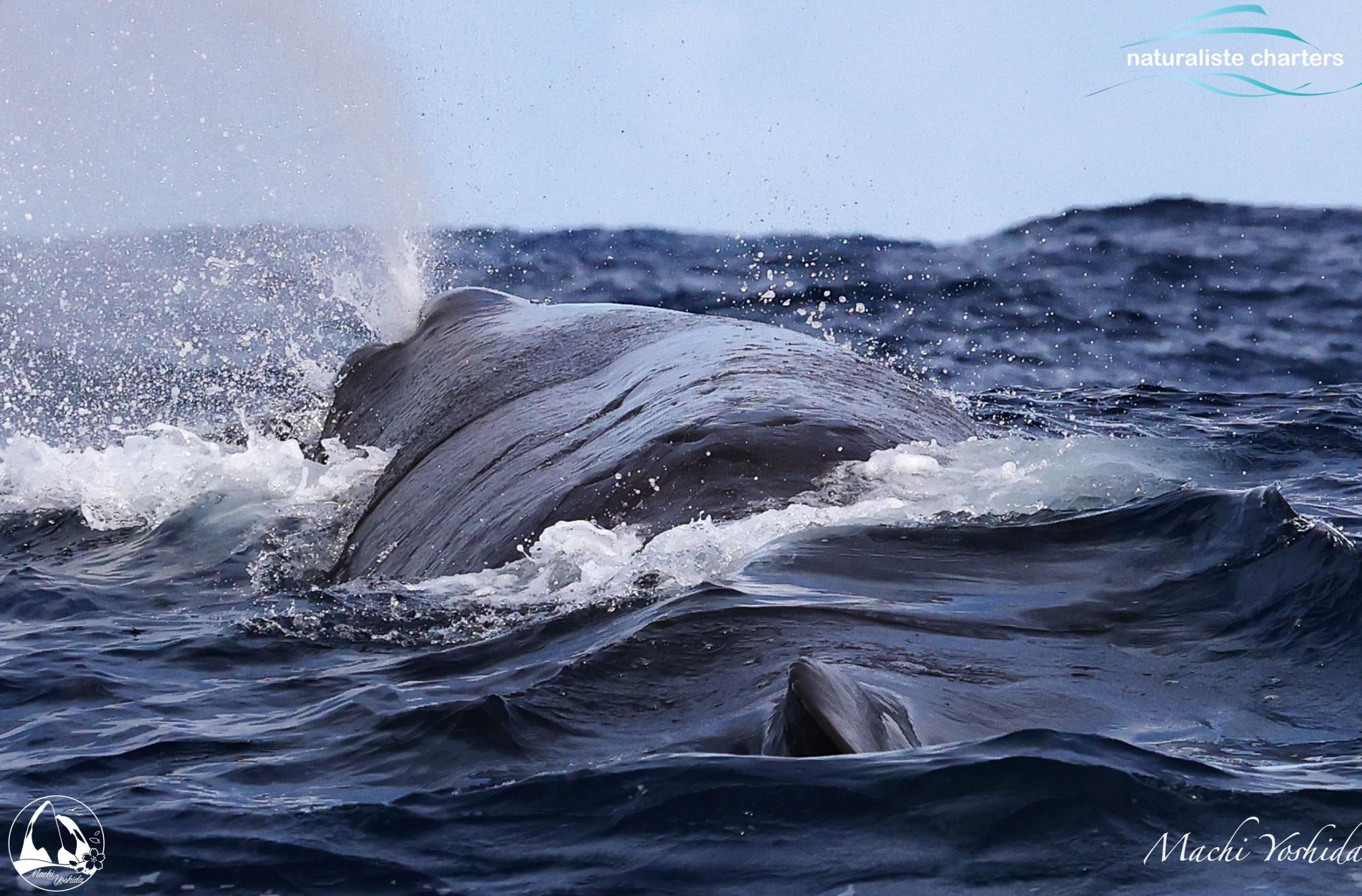 Whale Blow Bremer Bay Scaled